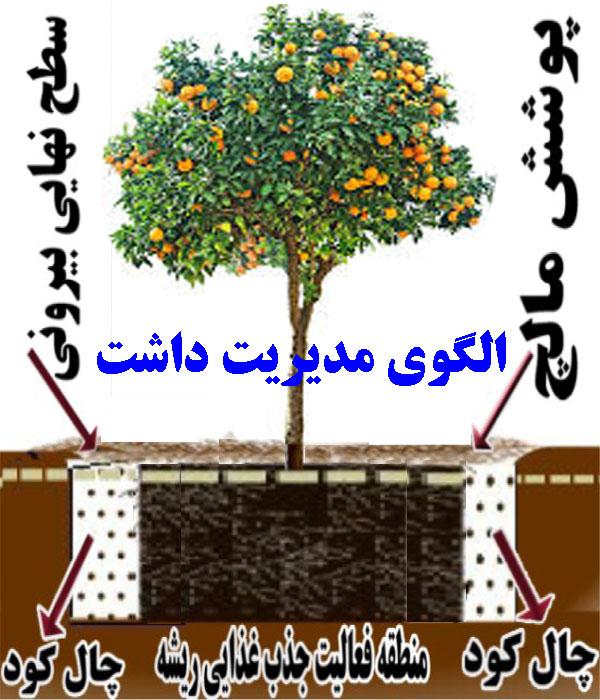 الگوی مدیریت کاشت